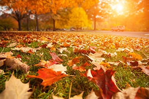 Melissa Woods Blog What does Autumn Teach Us